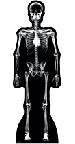 X-Ray Skeleton